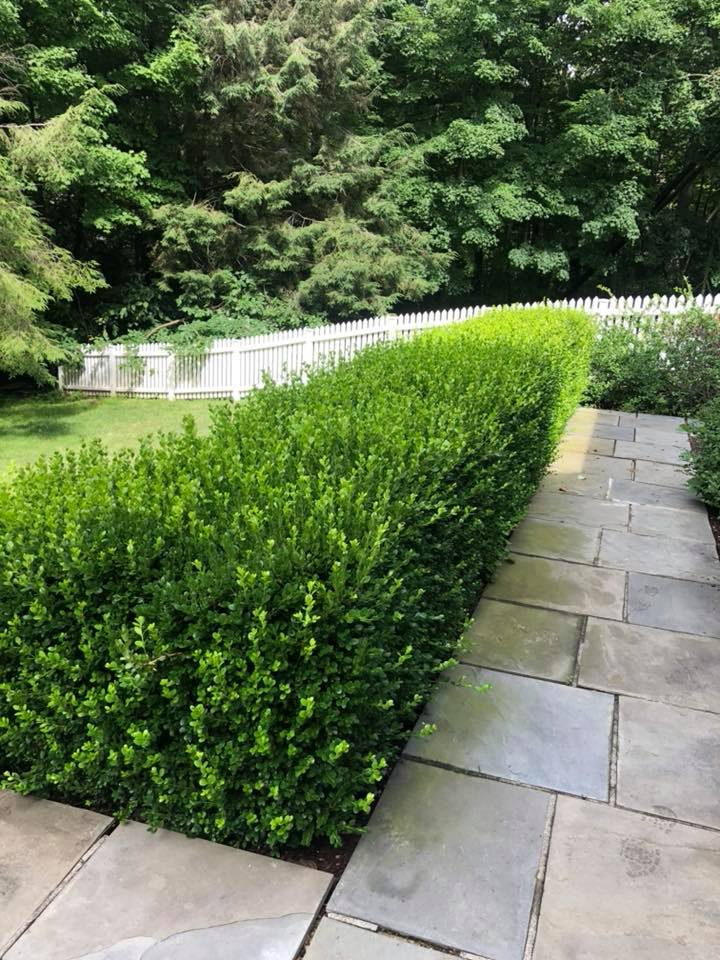 brookfield lawn care
