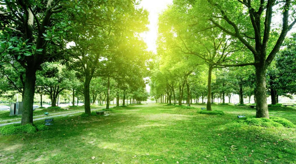 tree service newtown ct